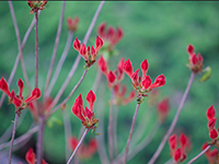 red-flowers-web